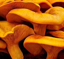 Jack-O-Lantern Mushroom by Victoria Jostes