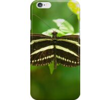Zebra Longwing butterfly iPhone Case/Skin