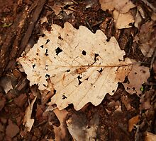 Fallen foliage by SammyPhoto