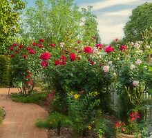 Roses - the Flowers of Love by Elaine Teague