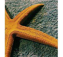 carpet starfish Photographic Print
