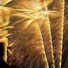Fireworks by Kasia Nowak