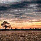Sunset Orange by Vicki Field