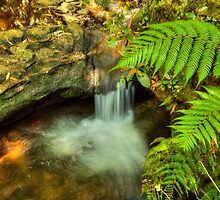 Leura Silk by Michael Matthews