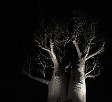 Boab Tree  by EOS20