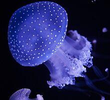 Australian spotted jellyfish by manateevoyager