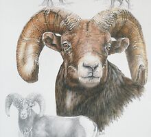 Big Horn Sheep by BarbBarcikKeith