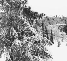 Black and White Shot of Snow-Covered Fir Tree in Frozen Winter Landscape Sticker