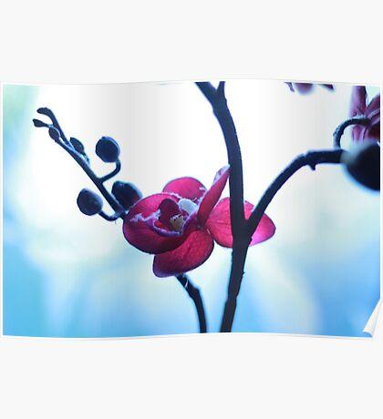 Forgotten Flower Poster