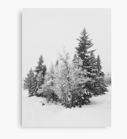 Snow-Covered Fir Trees in Frozen Winter Landscape in Black and White Canvas Print