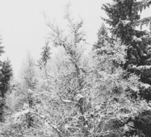 Snow-Covered Fir Trees in Frozen Winter Landscape in Black and White Sticker