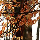 Beech Leaves In Winter by Debbie Oppermann