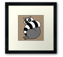 Lemur Curled Up Framed Print