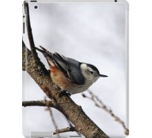 Perched Nuthatch iPad Case/Skin