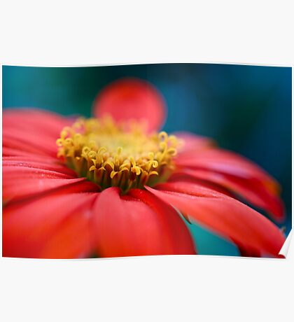 Red Daisy with Swirls Poster