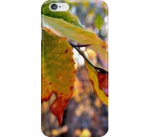 Fall Change iPhone Case/Skin