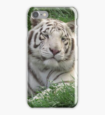 White Bengal Tiger - Adult Male iPhone Case/Skin