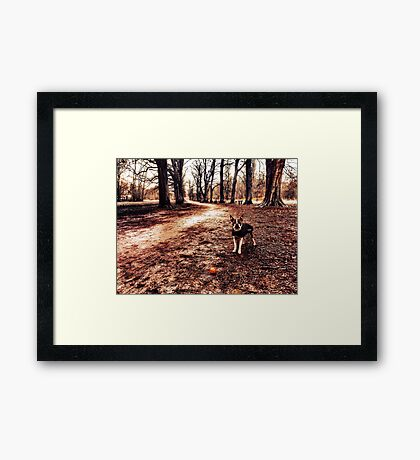 Portrait of a dog in winter Framed Print