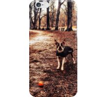 Portrait of a dog in winter iPhone Case/Skin