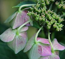 Summer's Fading Beauty by Gilda Axelrod