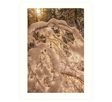 Backlighting sun shines behind snow covered branches Art Print