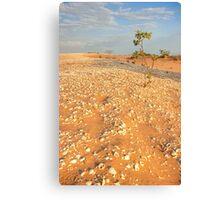 broome sand dune tree Canvas Print