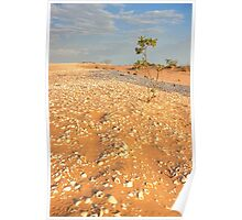 broome sand dune tree Poster