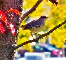 Mockingbird Enjoying The Autumn Day by James Brotherton