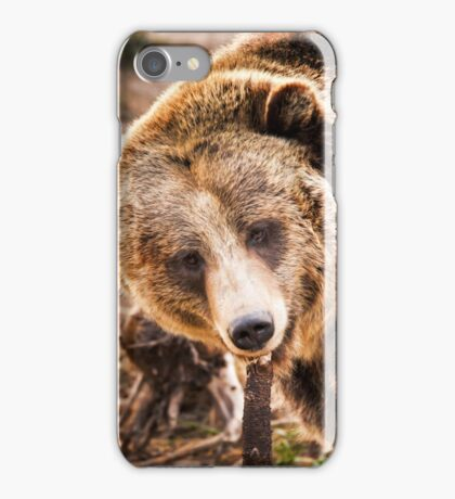 Kodiak Bear iPhone Case/Skin