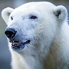 Polar Bear by damhotpepper