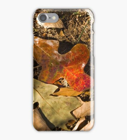 Prowling with the Kit Lens 1 iPhone Case/Skin