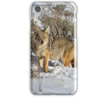 Peeking Coyote iPhone Case/Skin