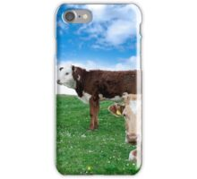 Irish cattle feeding on the green grass iPhone Case/Skin