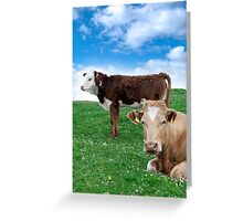 Irish cattle feeding on the green grass Greeting Card