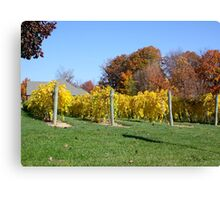 THE VINEYARD IN OCTOBER Canvas Print