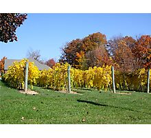 THE VINEYARD IN OCTOBER Photographic Print