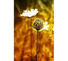 Dordogne Roadside Flower 1 Photographic Print