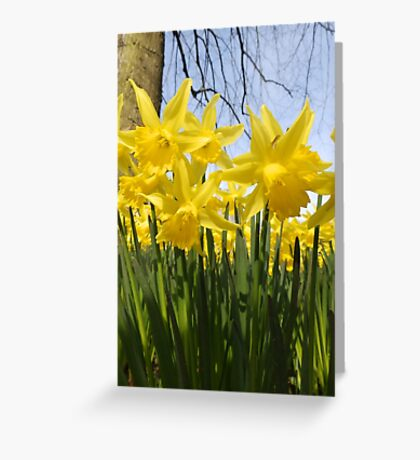 Daffodils 2 by Amber Feng Shui Art Greeting Card