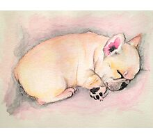 Sleeping Frenchie Photographic Print