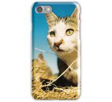 Fat Cat and Tigga iPhone Case/Skin