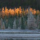 Frosty morning in Algonquin Park, Canada by Jim Cumming