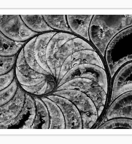calcified nautilus, bw Sticker