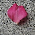 One petal on a nunnery floor by Courtney Taylor