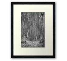 Woods #02 Framed Print