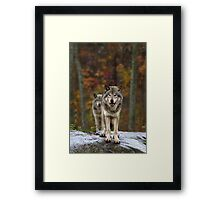 Double Trouble - Timber Wolves Framed Print