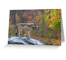 Timber Wolf in the rain Greeting Card