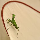 Mantis in action by Aase