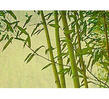 Zen bamboo abstract pattern with retro grunge feel Photographic Print