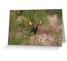 Bull Moose in Algonquin Park, Canada Greeting Card