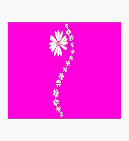 Daisy flowers in pink Photographic Print